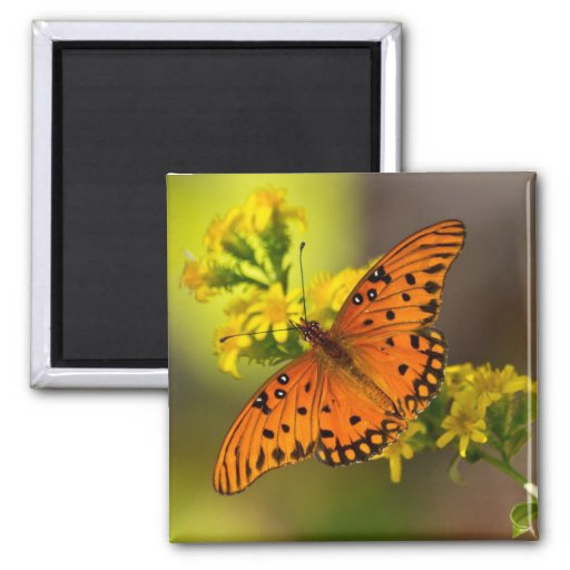 Fritillary Gulf Butterfly Gifts and Apparel Magnet