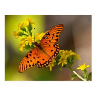 Fritillary Gulf Butterfly Gifts and Apparel Postcard