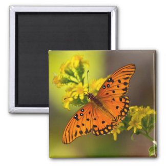 Fritillary Gulf Butterfly Gifts and Apparel Square Magnet