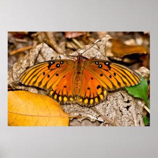 Fritillary Gulf Butterfly Warming Wings Poster
