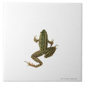 Frog 2 tile