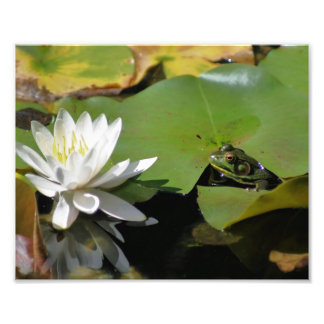 Frog Admiring Water Lily 10x8 Nature Print Photo