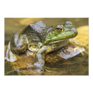 Frog along the Buffalo River, Mile 126 on the Photograph