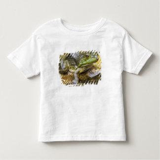 Frog along the Buffalo River, Mile 126 on the Tee Shirts
