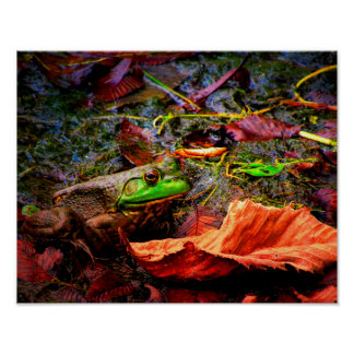 Frog and Colors Poster