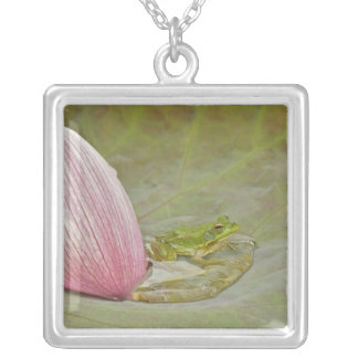 Frog and lotus flower petal, China, Silver Plated Necklace