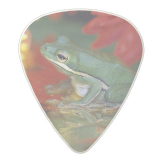 Frog and reflections among flowers. Credit as: Acetal Guitar Pick