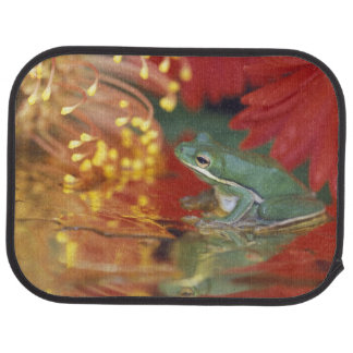 Frog and reflections among flowers. Credit as: Car Mat