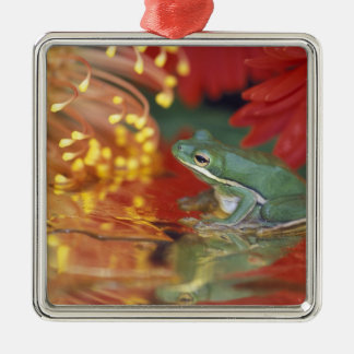 Frog and reflections among flowers. Credit as: Christmas Ornament