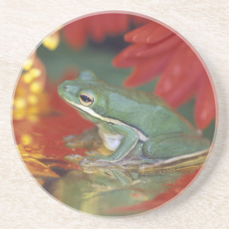 Frog and reflections among flowers. Credit as: Coaster