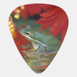 Frog and reflections among flowers. Credit as: Guitar Pick