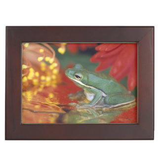 Frog and reflections among flowers. Credit as: Keepsake Box