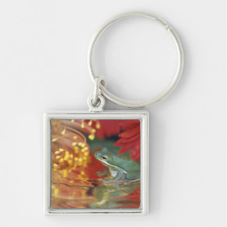 Frog and reflections among flowers. Credit as: Key Ring