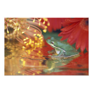 Frog and reflections among flowers. Credit as: Photo Print