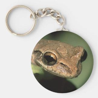 frog basic round button key ring
