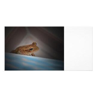 Frog behind blue neat animal amphibian photo customized photo card