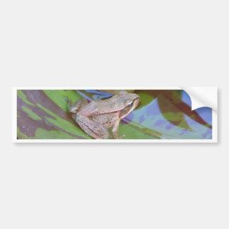 Frog Bumper Sticker