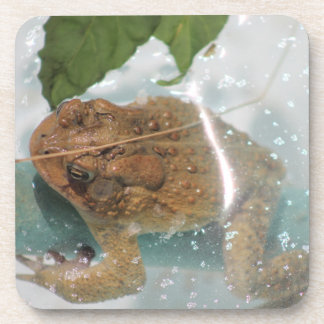 frog - coasters