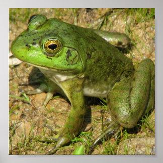 Frog Design Poster Print