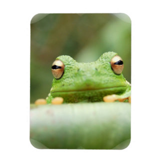 Frog Eyes Premium Magnet Rectangle Magnets