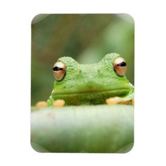 Frog Eyes Premium Magnet