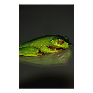 Frog Custom Flyer