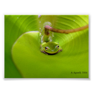 Frog hiding in a Banana leaf Poster