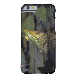 Frog in a pond barely there iPhone 6 case