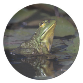 Frog in a pond plate
