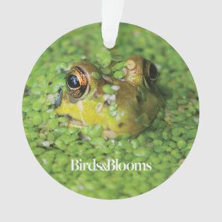 Frog in Green Algae