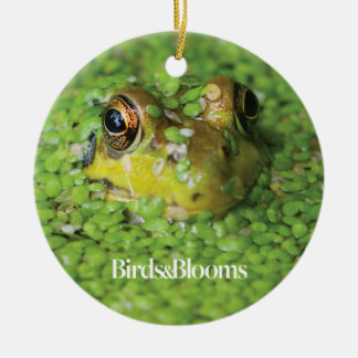 Frog in Green Algae Christmas Ornament