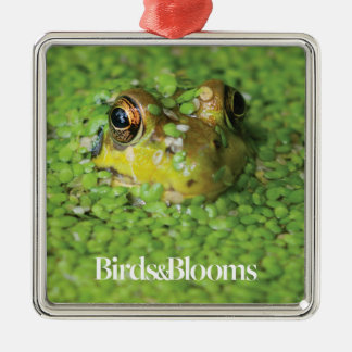 Frog in Green Algae Christmas Ornament