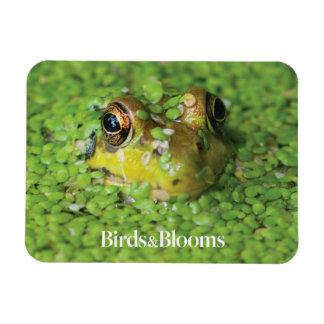 Frog in Green Algae Rectangular Photo Magnet
