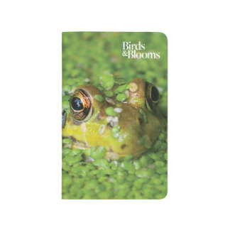Frog in Green Algae Journal