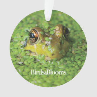 Frog in Green Algae Ornament