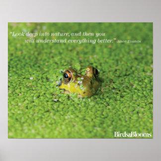 Frog in Green Algae Poster