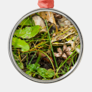 Frog in the grass Silver-Colored round decoration