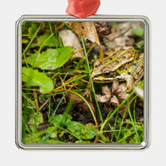 Frog in the grass Silver-Colored square decoration