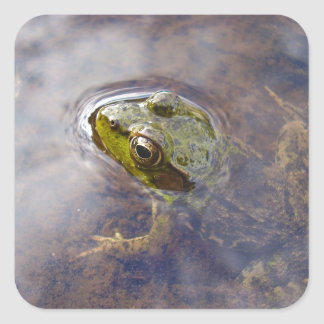 Frog in Water Square Sticker