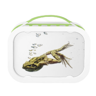 frog jumping and diving into the water lunch box