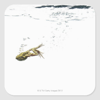 frog jumping and diving into the water stickers