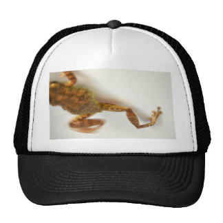 frog jumping towards left side animal amphibian mesh hats