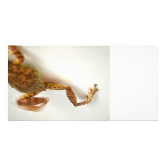 frog jumping towards left side animal amphibian photo card