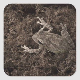frog left on moss sepia tone square sticker
