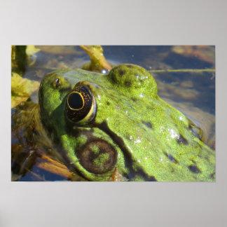 Frog Macro Poster