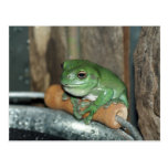 Frog on Bucket Post Cards