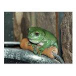 Frog on Bucket Postcard