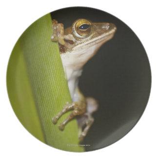 Frog on leaf in profile plates