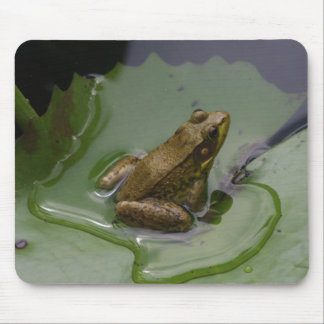 Frog on Lily Pad Mouse Pad