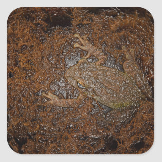 frog on moss embossed look square stickers